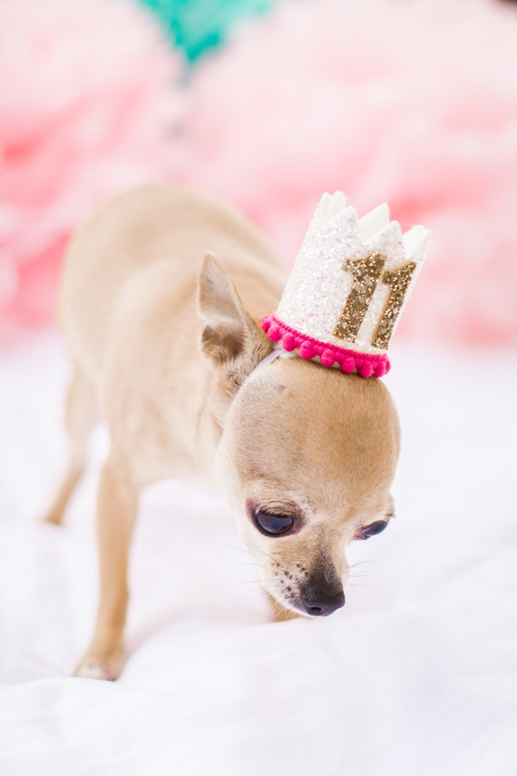 Pet Party Hat || Animal Party Decoration || Puppy Party Hat || Animal Lover Gift || Pig Kitty Dog Birthday Hat