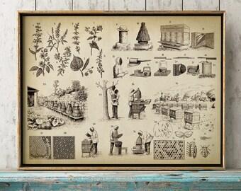 BEEKEEPING Poster, Beekeeper Chart Print, Apiculture Art Illustration, Bee Home Decor, Honey Wall Art, Honey Plants, Hive, Beehive Art