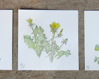 Three Original watercolor Flowers