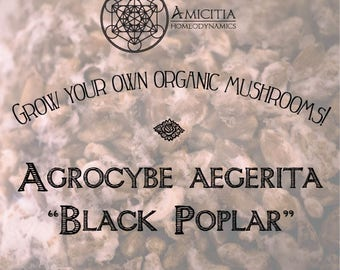 Organic Black Poplar Grain Spawn (Agrocybe Aegerita) LIVE MYCELIUM - 70g *PDF Book Included