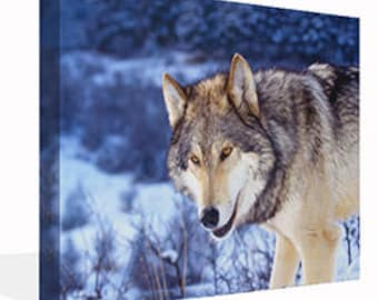 Wolf In The Snow Canvas Print Ready To Hang Or Poster Print