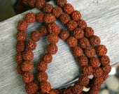 Rudraksha Beads, 11mm, String of 100.  Prayer Beads, Mala Beads.  From India