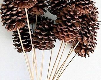 Stemmed Pine Cones | Pine Cones | Natural Pine Cones | Ponderosa Pine Cones
