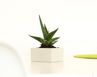 Concrete shell. Concrete shell. Jewelry tray | Planter | Concrete planter | Cube