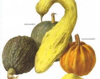 Set of 2 Vintage Vegetable Prints Pumpkin Squash 1970s Illustrated Color Plates Book Pages