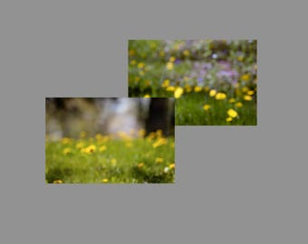 Dandelions and Summer Bokeh Photo Digital Download Yellow and Purple Flowers in Green Grass Blurred Stock Background Image