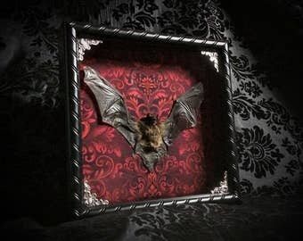 Taxidermy Bat Shadowbox - Real Bat - Gothic Home Decor - Gothic Gift - Oddities - Curiosities - Gothic Decor - Halloween Decoration Bat Gift