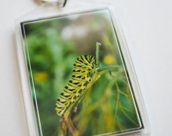 "Insect Keychain - Black Swallowtail Caterpillar Keychain - Acrylic Keychain - 2"" x 3"" Photo Keychain"