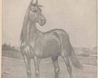 Vintage Animal Print - Horse & Jockey Illustration by Gean Smith / Antique book page for Framing