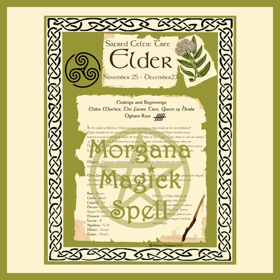 Elder Sacred Celtic Tree