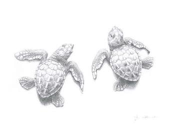 Signed Print - Two Sea Turtle hatchlings - A4 pencil drawing