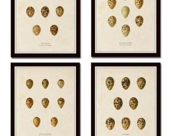 Vintage Bird Eggs Print Set No. 2, Bird Egg Print, Natural History Art, Art Prints, Wall Art, Giclee, Cottage Decor, Scientific Illustration
