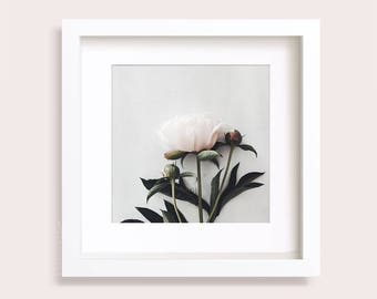 Flower Print, Pale Pink Flower Peony, Botanical Photo, Floral Wall art, Gallery Wall, Square print, Pivoine Rose 5x5, 8x8, 9x9, 10x10, 12x12