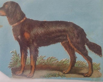 1880's Victorian Scrap Gordon Setter diecut dog