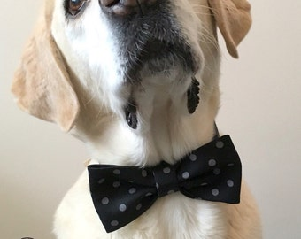 Black Polka Dot Bow Tie & Collar OR Bow Tie Only *OPTIONAL