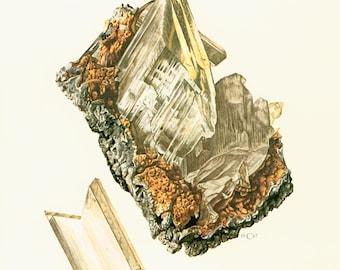 1970 Gypsum Selenite Crystals Print. Minerals Wall Art. Vintage geology Illustration.