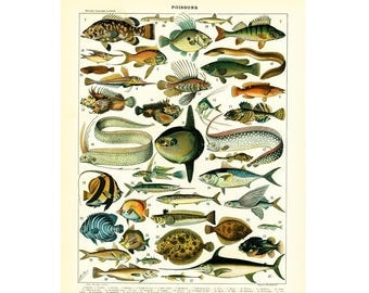 1897 Antique Sealife Print, Fishes, illustration Larousse, Large Size French Encyclopedia