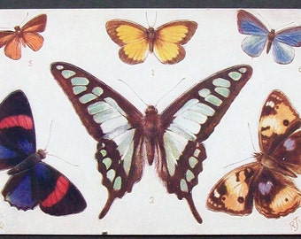 Unusual vintage  Butterfly  postcard.
