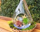 Hanging terrarium/succulent terrarium/succulent planter/beach theme/succulent garden/succulent wedding decor/terrarium/planter/succulents