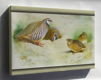 Canvas 16x24; French Partridge And Chicks By Archibald Thorburn 1915