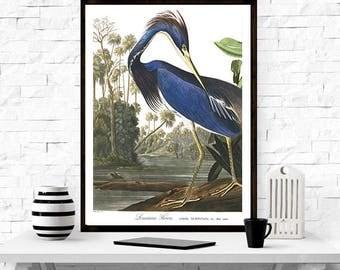 Louisiana Heron - Birds of America, John James Audubon, vintage Heron art, home decor, Birds,