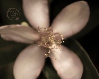 Floral Photography Instant Download Photography Botanical Print Nature Photography Print  Flower Photography Fine Art Photography