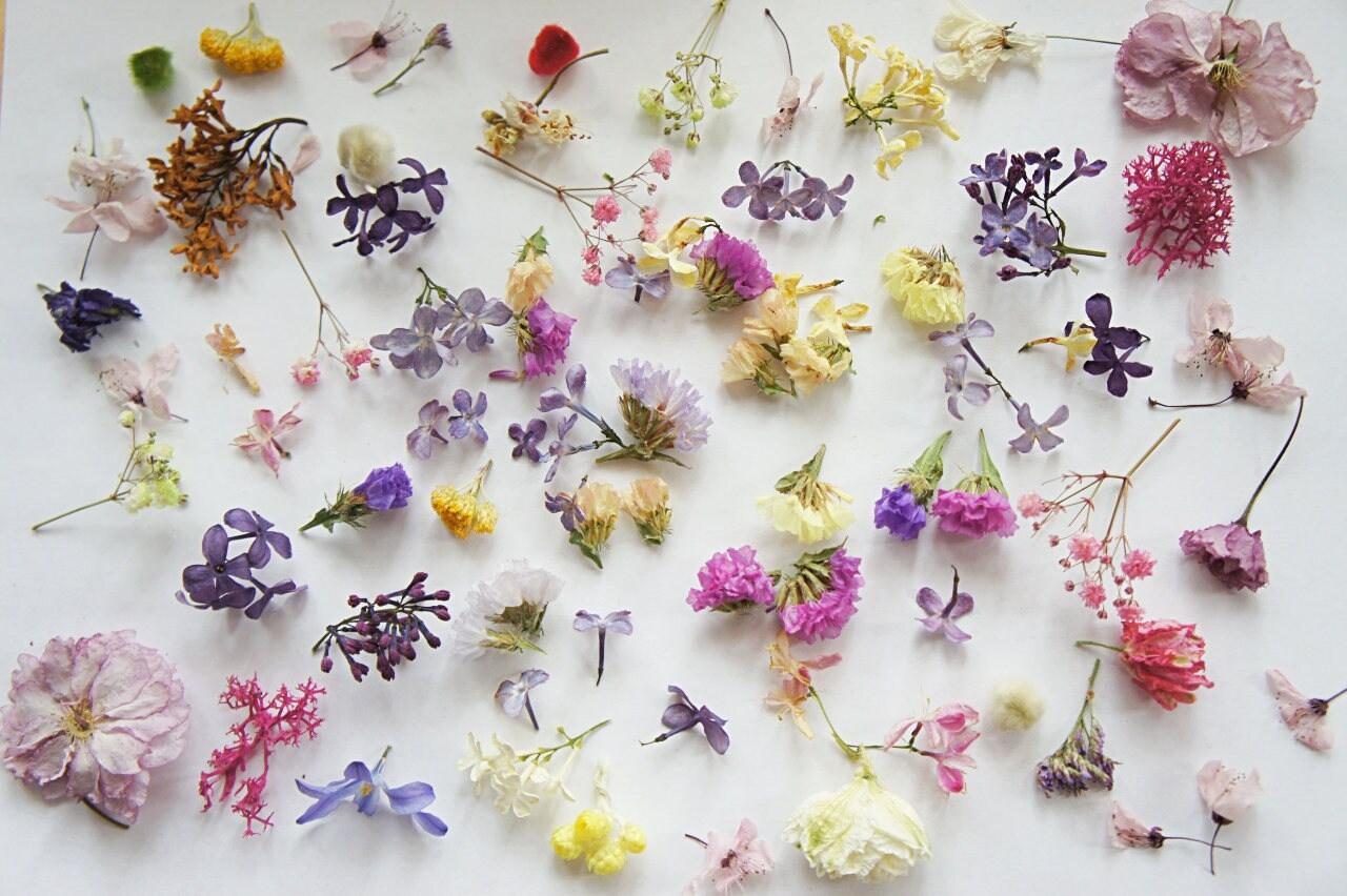 fleurs s ch es mini pour bijoux en r sine fleur mixte pour. Black Bedroom Furniture Sets. Home Design Ideas