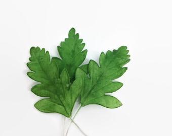 Fern Leaves set of 15