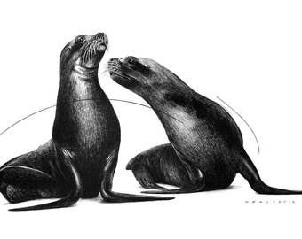 Black and White Drawing Print – Sea Lions