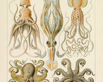 Ernst Haeckel Octopus and Squid Poster - Vintage Ocean Art Print - Vintage Wall Art - Museum Quality