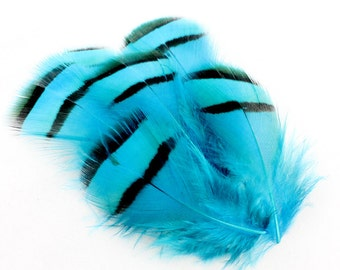 2-3 Inch Blue Lady Amherst Feathers (12) Blue Pheasant Feathers. Blue Feathers. Blue Earring Feathers. Blue Bird Feathers. Scrapbook Feather
