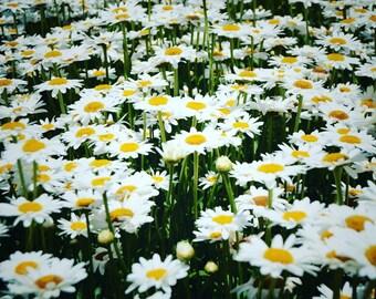 Happy Summer Daisies