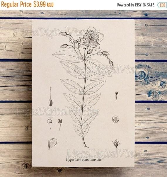 50% OFF Floral print, Antique wall art, Flower printable, Botanical print vintage, Botanical, Printable graphics, Download prints, PNG JPG 3