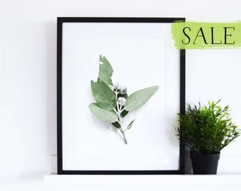 CLEARANCE // Eucalyptus