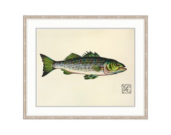 "Green Striper Giclee Print Of Watercolor Painting 11""x14.5"" for the Freshwater / Salt Water Angler. Rock Fish Painting"