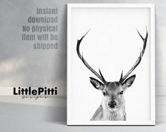 Woodland nursery decor, deer decor, black and white animal photo, large printable, deer home art, deer print, woodland deer art, digital art