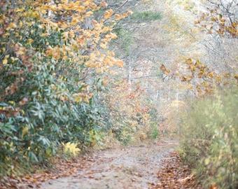 Blue Ridge Parkway - Fall Pathway 1/2 - Horizontal