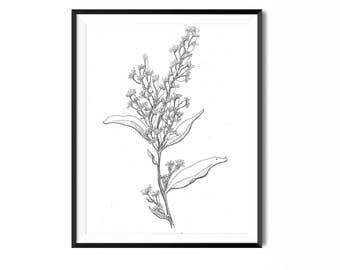 Goldenrod Print, Botanical Illustration, Wall Art, Flower Art Print, Floral Art, Botanical Print, Black and White Flower Print, Flower Print
