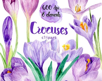 Watercolor spring flower Crocus clipart 600 dpi PNG, floral collection,spring, PNG on transparent background for scrapbooking,DIY cards