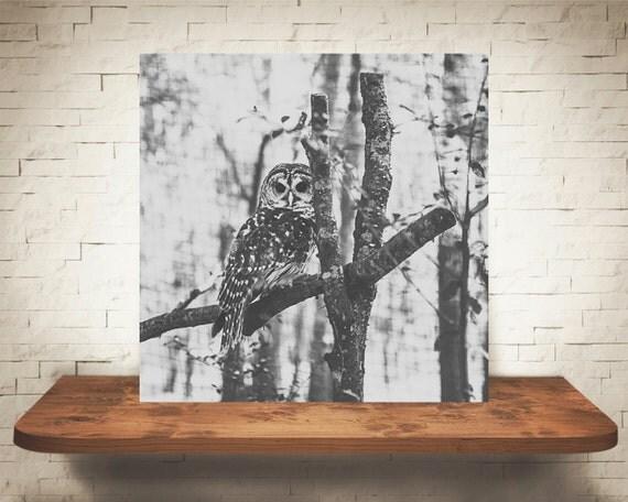 Owl Photograph - Fine Art Print - Black & White Photo - Wall Decor - Owl Wall Art - Owl Pictures - Black White Decor - Nature Photography