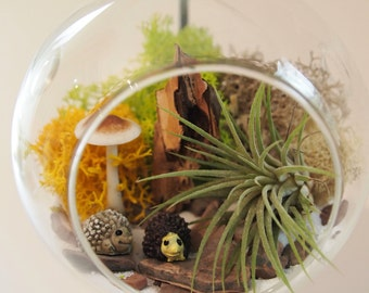 Air plant terrarium kit with hedgehogs:unique gift; tillandsia; unique gift ;terrarium;office decor