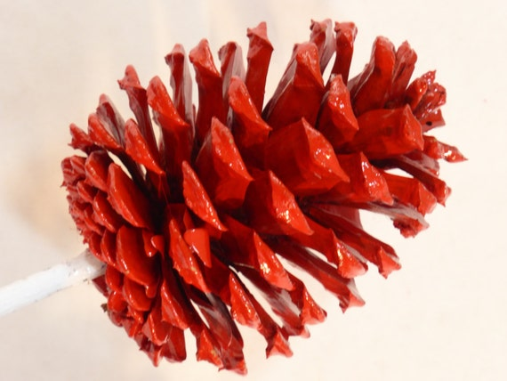 Valentine long stem red pine cones in small bouquet with a for Long pine cones