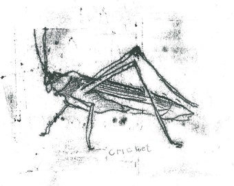 Original Monoprint Ink Drawing by Contemporary Artist Olivia pilling  'Cricket'