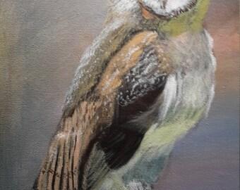 Pensive Owl
