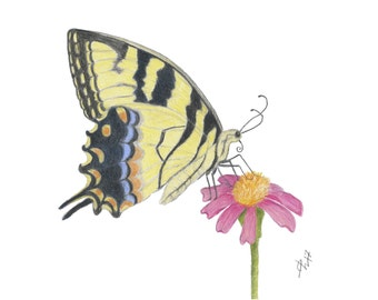 Tiger Swallowtail Butterfly Print, Butterfly Art Print, Butterfly Wall Decor, Butterfly Giclee Print