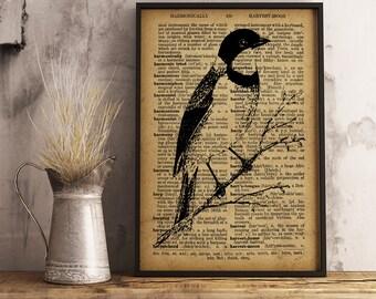 Bird print wall art room decor Bird Poster Homer Decor Wall Art Vintage Style Print Animal Printable For Home ornithologist gift  A06