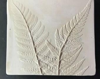Fern in White