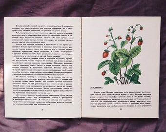 Vintage book with berries illustrations, reference book, guide book
