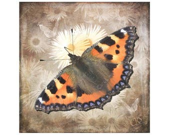 Greetings Card Butterfly