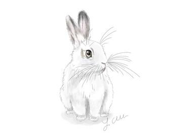 Rabbit Portrait - Barney